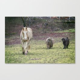 Tripper and The Goats Canvas Print