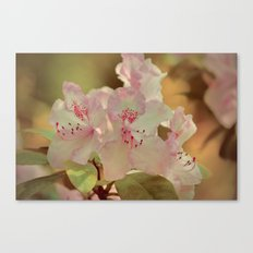 Pink Rhdodendron Canvas Print
