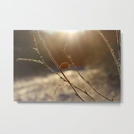 sunrise in frosted forest Metal Print