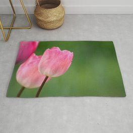 Pink tulips blossom close up- the spring is here Rug