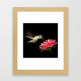 Hummingbird V Framed Art Print