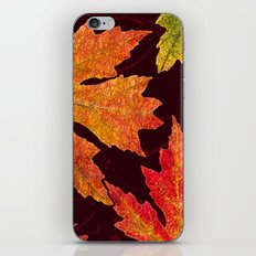 Leaves of Red Gold and Orange a Breath of Fall iPhone & iPod Skin