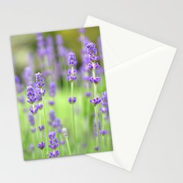Lavender Stems in a Field Stationery Cards