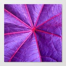 purple leaf macro XIV Canvas Print