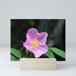 Pale Pink Wild Rose Mini Art Print