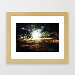 Golden Field Framed Art Print