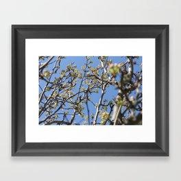 Branch Beauty Framed Art Print