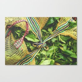 Freshly Picked Tea  Canvas Print