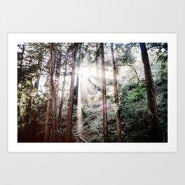 Big Sur Forest Sunbeams Art Print