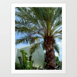Grand Turk Palm and Building Art Print