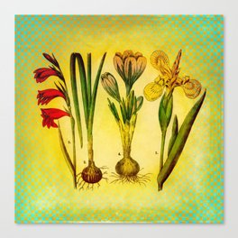 Garden Bulbs Canvas Print