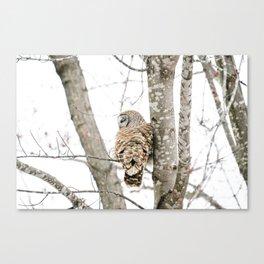 Barred Owl Side-Eye Canvas Print
