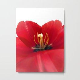 Open red tulip Metal Print