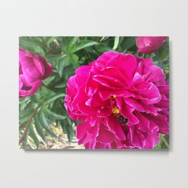 Fotography of Flower with happy Bee Metal Print