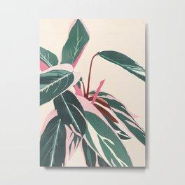Stromanthe Sanquinea Metal Print