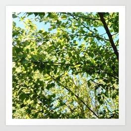Nature and Greenery 8 Art Print