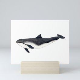 Harbour porpoise (Phocoena phocoena) Mini Art Print