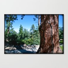 Camp Tree Canvas Print