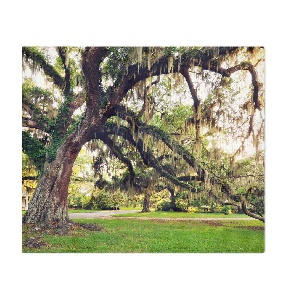 Live_Oak_Tree_With_Spanish_Moss_Throw_Blanket_by_jmccool