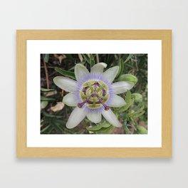 Passion Flower Blossom Framed Art Print