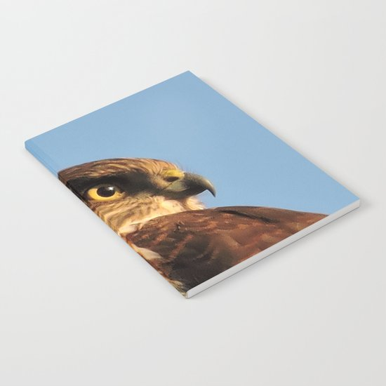 Young Cooper's Hawk Notebook
