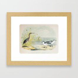 PLATE XL The Least Bittern The Sanderling, or Ruddy Plover Ornithology Birds Vintage Studies America Framed Art Print