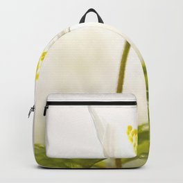 Wood Anemone Blooming in Forest Backpack