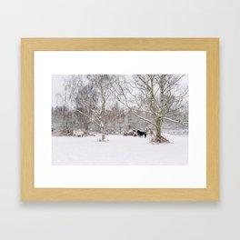 Wild ponies in snow. Litcham Common, Norfolk, UK. Framed Art Print