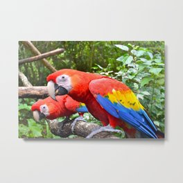 Friendly Macaws Metal Print
