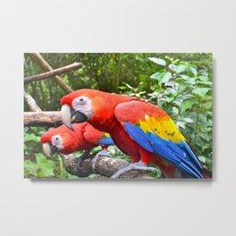 Friendly Macaws Metal Print