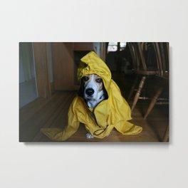 Brunos ready for the rain Metal Print