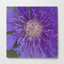 Passionately Purple Metal Print
