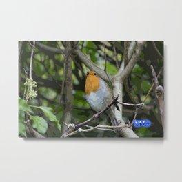 Robin on a branch Metal Print