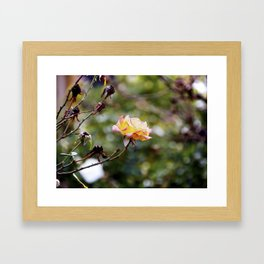 Beauty in the Thorn Framed Art Print