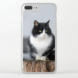 Black and white cat siting outdoor Clear iPhone Case