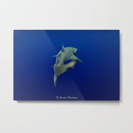 Lemon Shark Cruise Metal Print