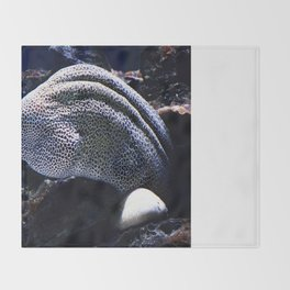 Honeycomb Moray Eel Throw Blanket