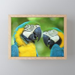 Blue-and-yellow Macaw Framed Mini Art Print