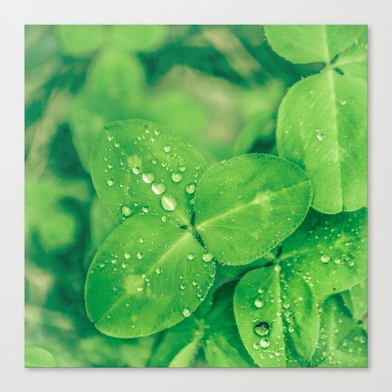 Clover leaf in the rain Canvas Print