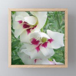 Summer Gladness Framed Mini Art Print