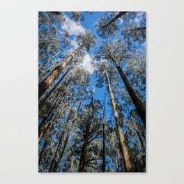 Tall Timber Canvas Print
