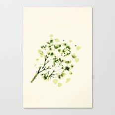 Green tickles - Botanical Print Canvas Print