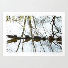 Five turtles  Art Print