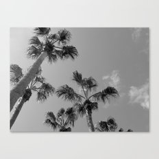 Palm Tress, Fuerteventura. Canvas Print