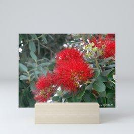 Red Flowering Gum Tree Mini Art Print