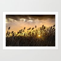Flowers at sunset in Tuscany Art Print