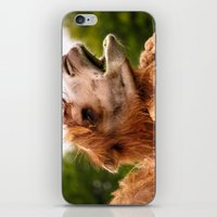 camel iPhone & iPod Skins featuring Camel by GardenGnomePhotography