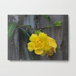 yellow flowering vine Metal Print