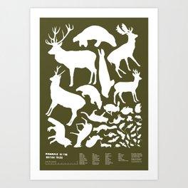Mammals of the British Isles Art Print