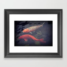 Koi Fish Framed Art Print